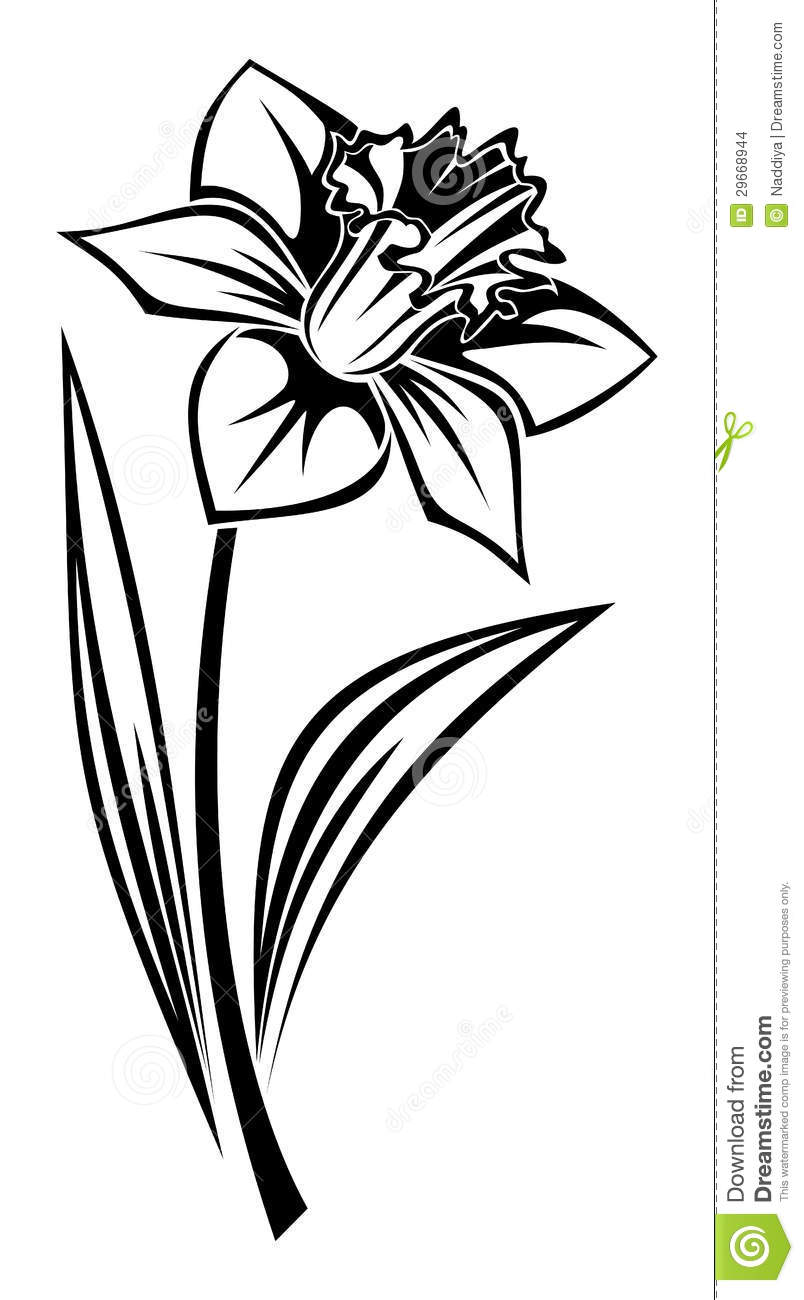 Black Silhouette Of Narcissus Flower Vector Stock Images