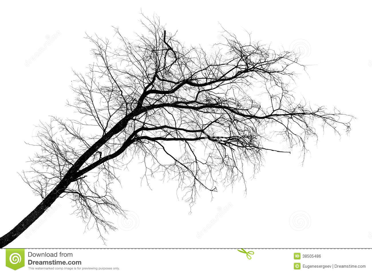 Black silhouette of tilt leafless tree on white