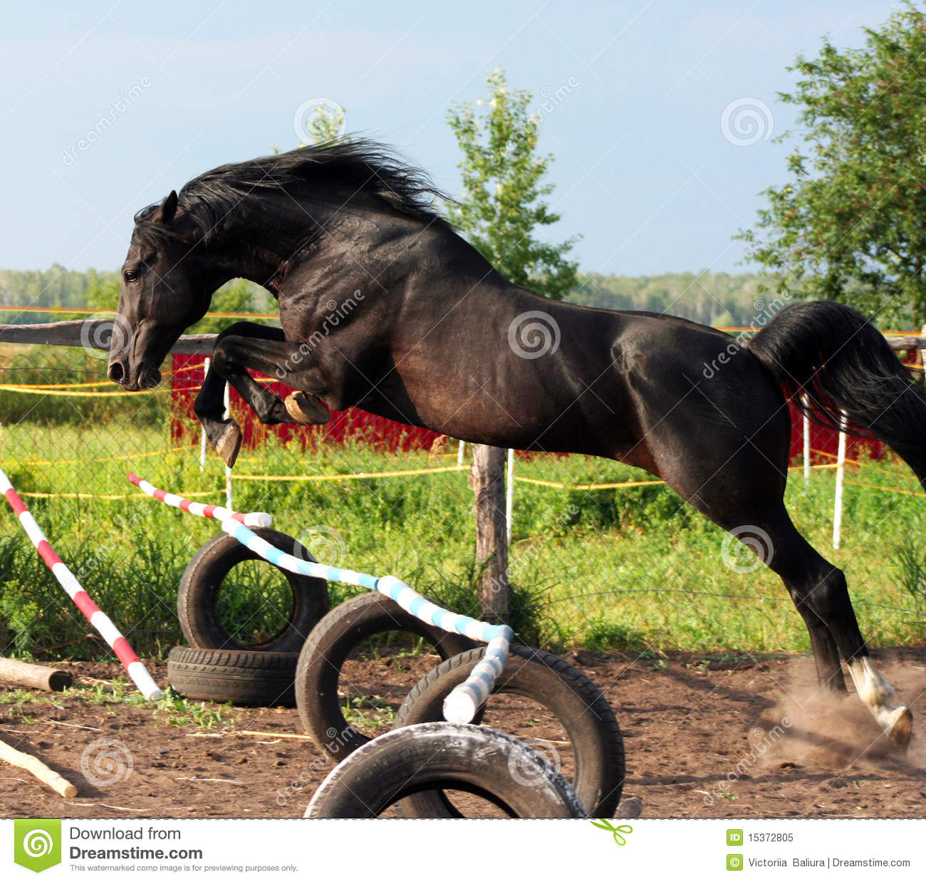 Black Stallion Stock Image Image Of Beautiful Horse 15372805