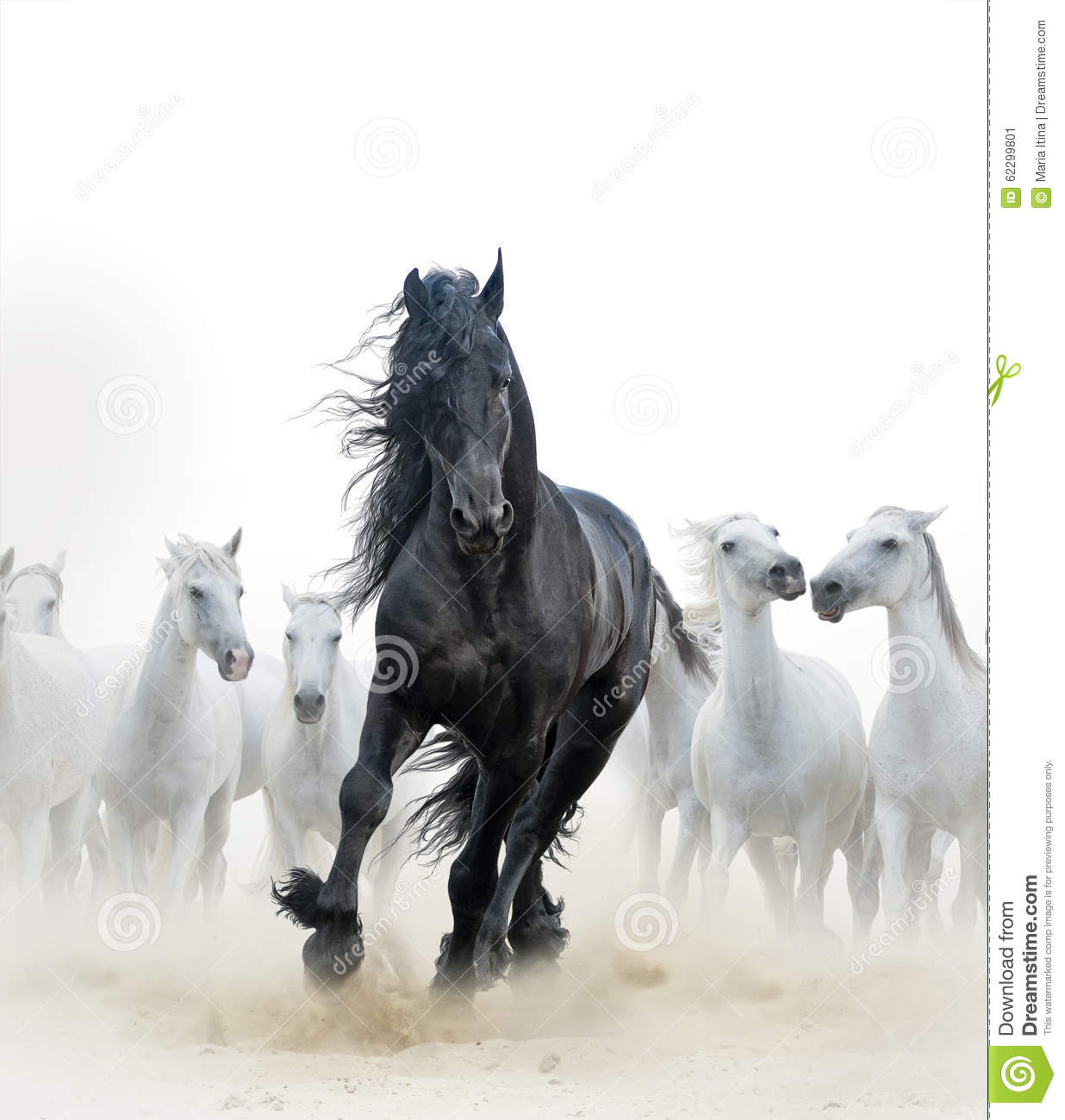 34 431 Black Stallion Photos Free Royalty Free Stock Photos From Dreamstime
