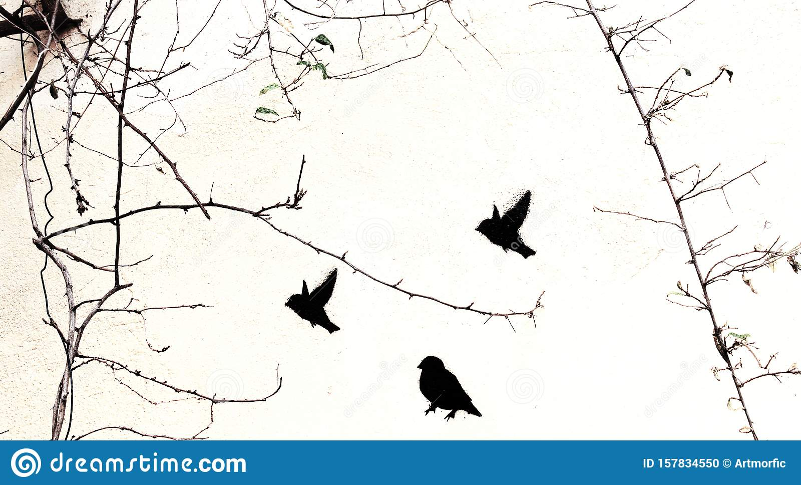 Black Stencil Painted Birds Street Art On White Wall With Real Natural Tree Branches With No Leaves Stock Photo Image Of Beauty Shape 157834550