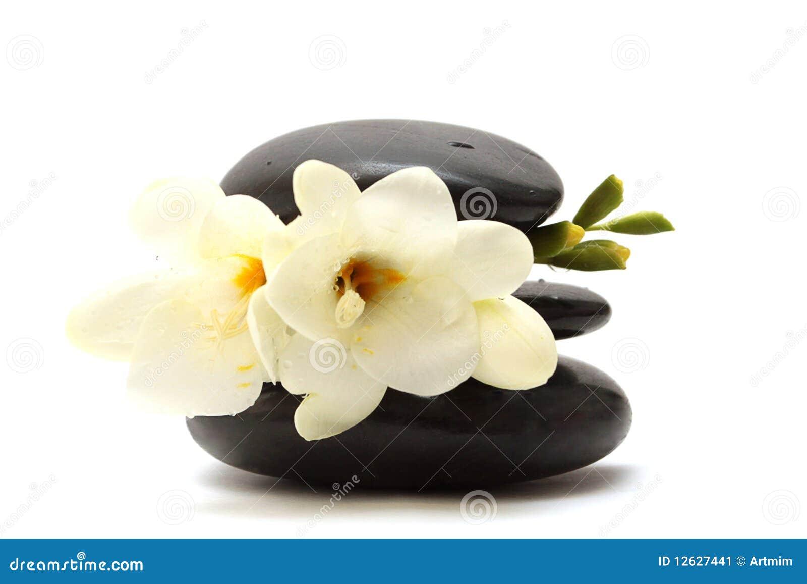 Black stones and white flower stock image image of medicine download black stones and white flower stock image image of medicine leaves 12627441 mightylinksfo