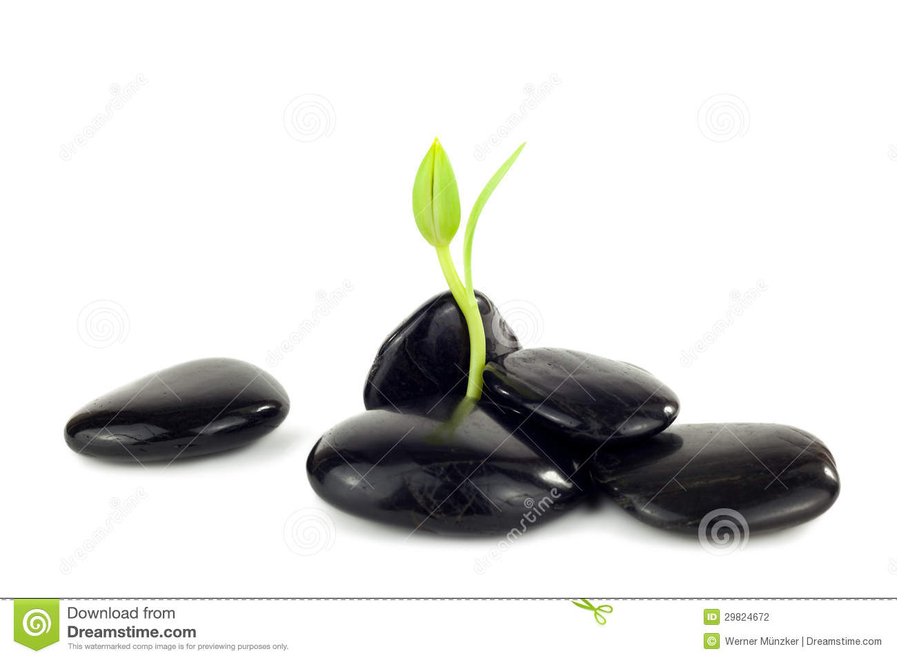 black stones with young little plant stock photography image 29824672. Black Bedroom Furniture Sets. Home Design Ideas