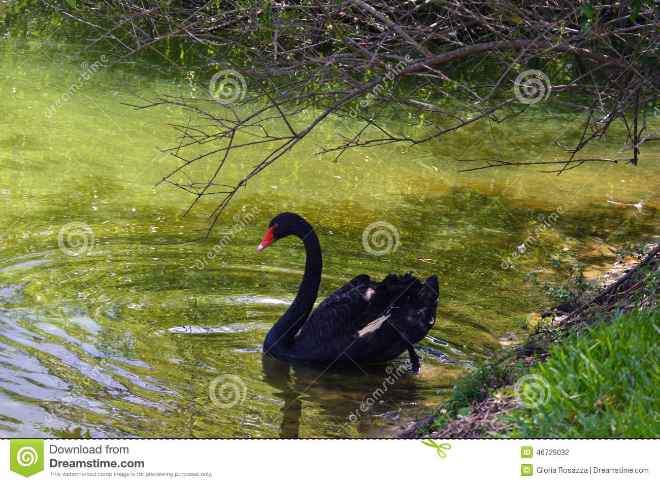 black swan green letter to They will also build vocabulary, write routinely, and, at the end of the unit, develop an essay that synthesizes ideas in the two texts: (nonfiction and fiction), mr rilke's letters to a young poet and mitchell's black swan green.