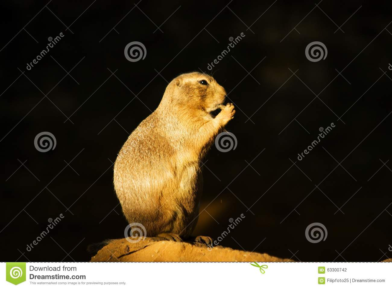What Eats Black Tailed Prairie Dogs