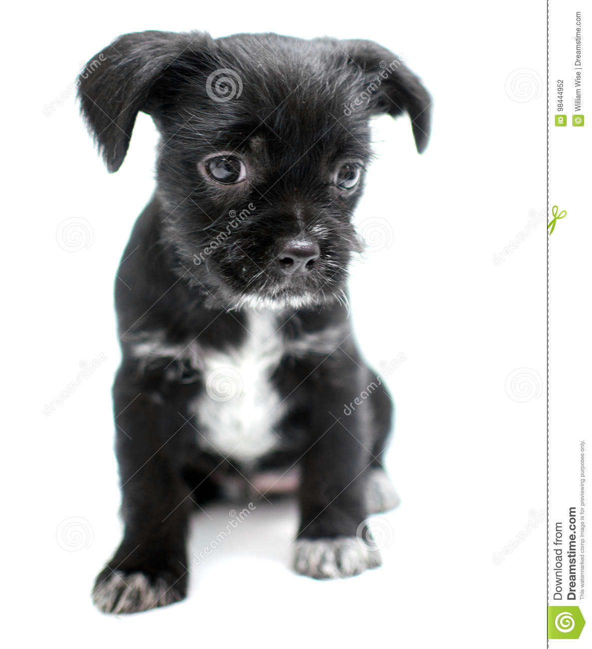 Famous Wire Hair Terrier Mix Puppies For Sale Picture Collection ...
