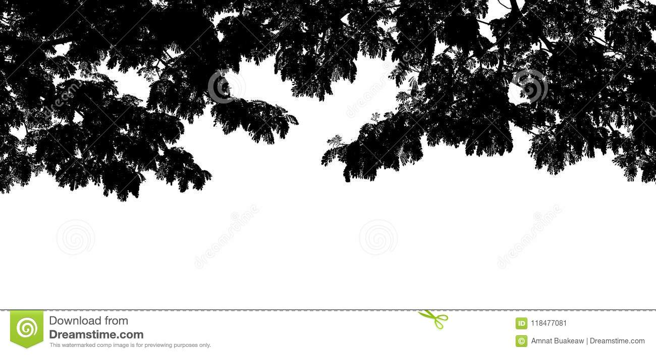 Black Tree Branch Shape Silhouette On White Background