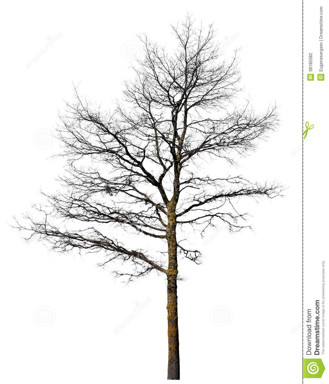 Black Tree Without Leaves Isolated On White Stock Photography - Image ...