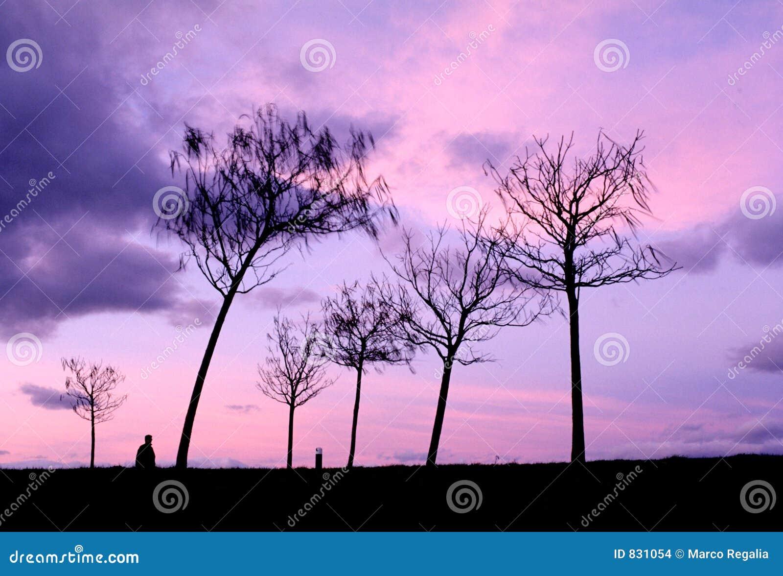 Black trees silhouette