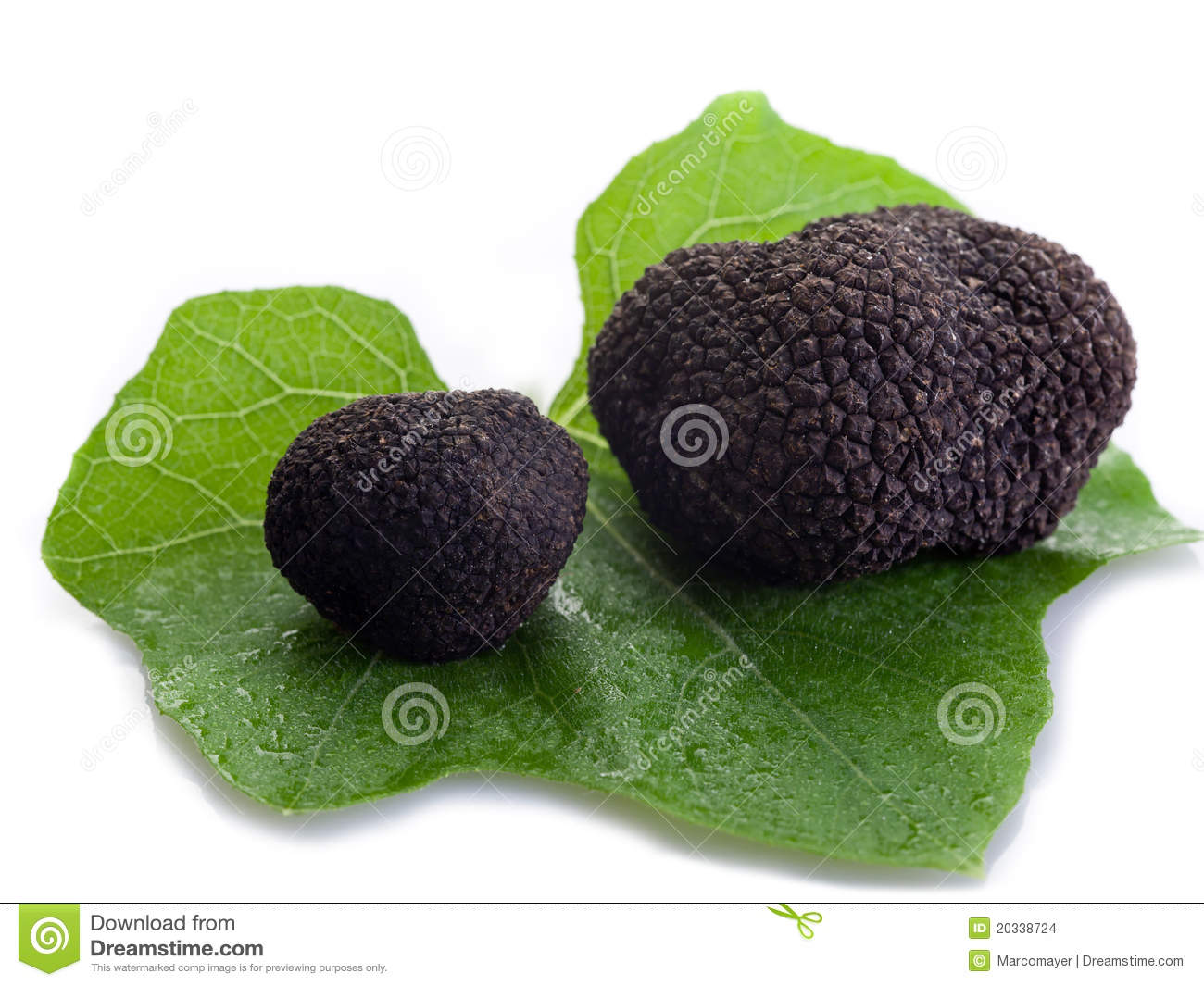 Black Truffle Over Leaf On White Stock Photo - Image of brown