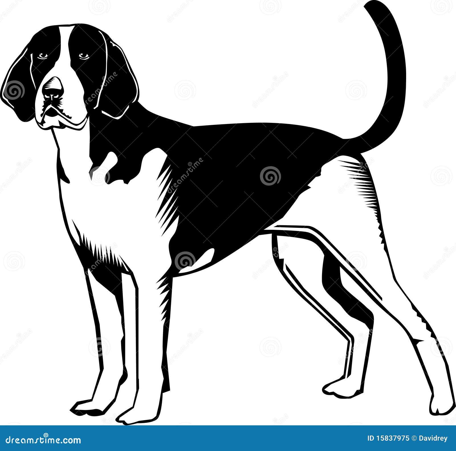 French White And Black Hound – wds2018  |Black And White Hound Dog