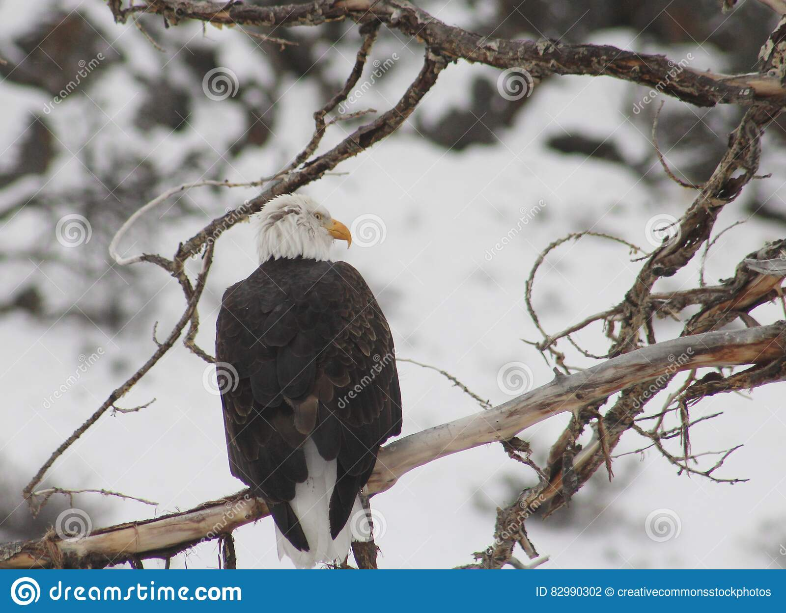 Download Black And White Bird On Top Of Brunch Of Tree Stock Photo - Image of stock, photo: 82990302
