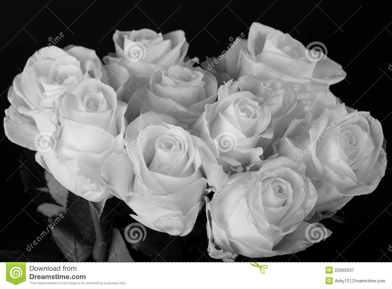 Black And White Rose Bouquet Photography