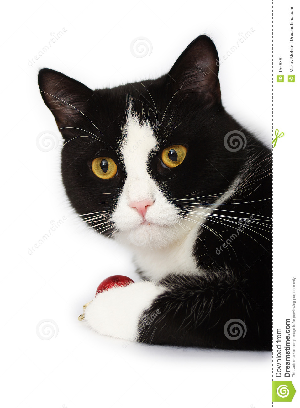 Black And White Cat Royalty Free Stock Images - Image: 1566869