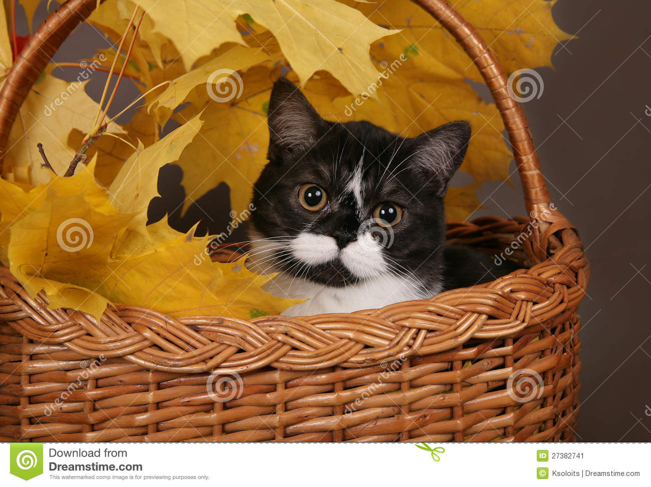 Black And White Cat In A Basket Stock Image - Image: 27382741