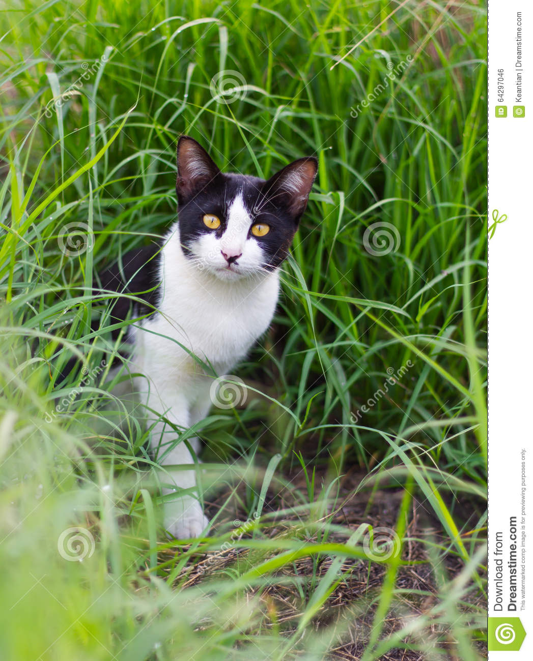 Black And White Cat In The Grass. Stock Photo - Image of meadow ...