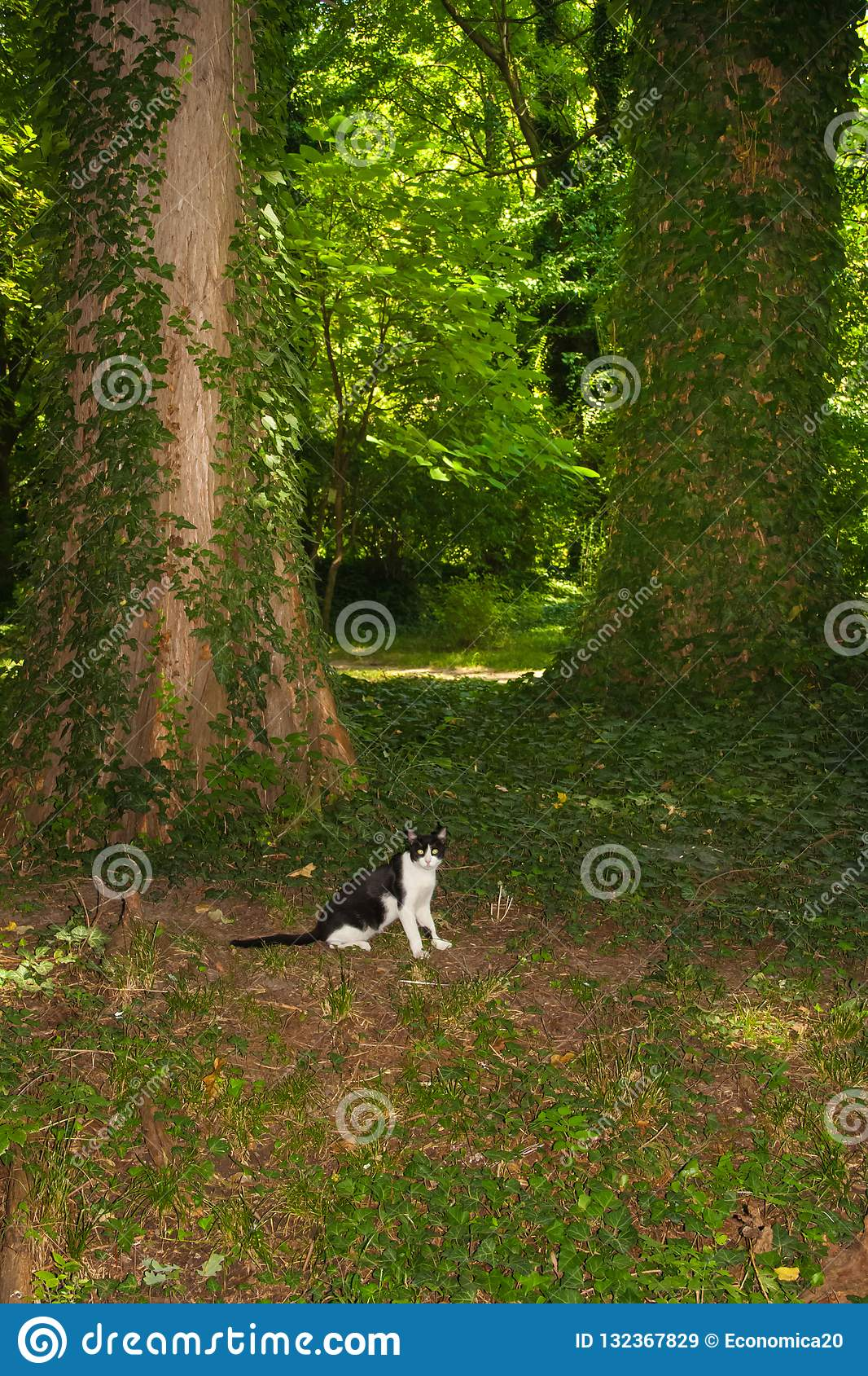 Domestic cat explore the forest