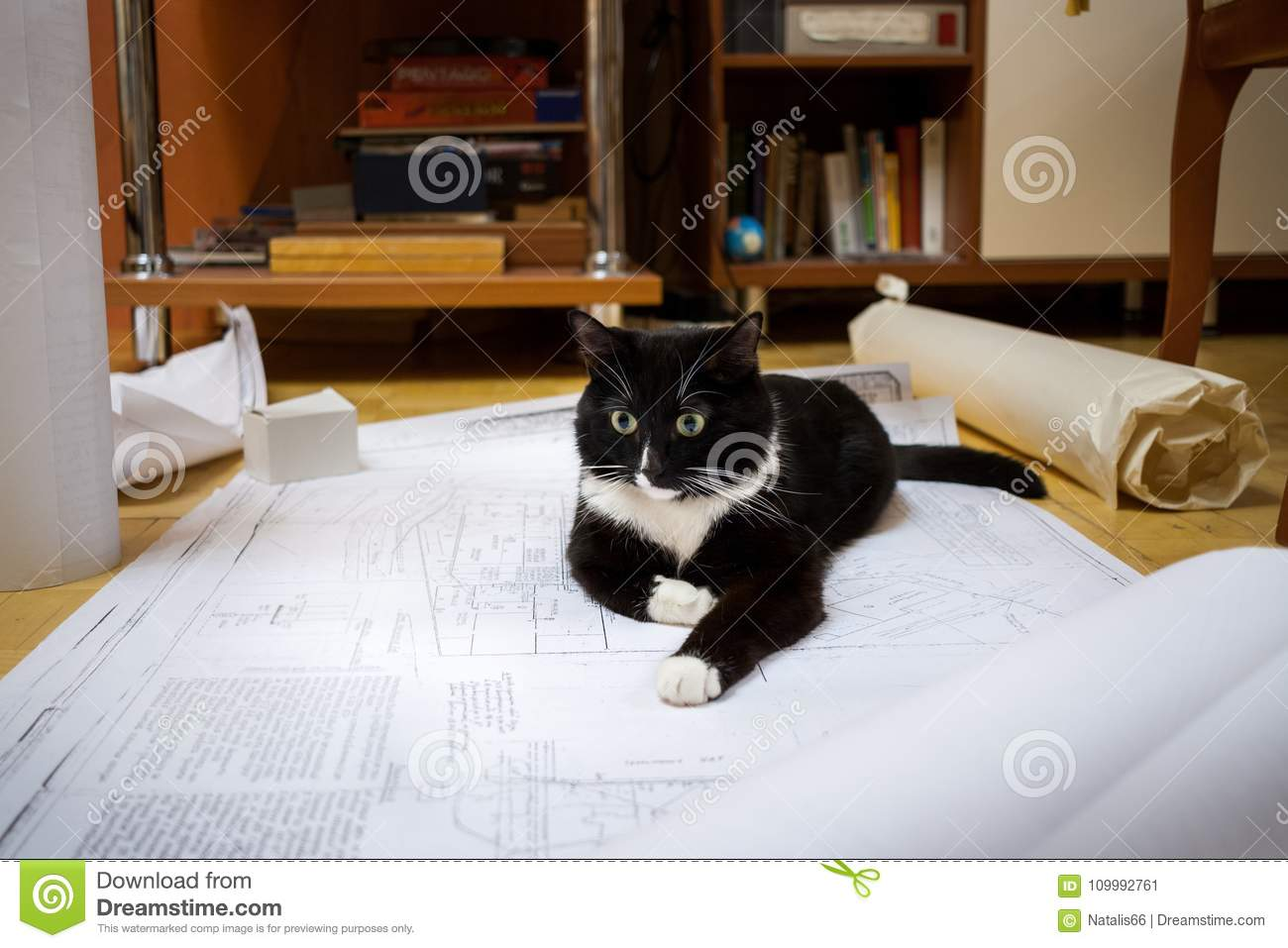 Black and white cat is lying on the floor on the drawings.