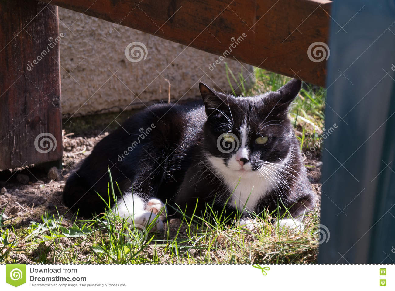 Black And White Cat Outdoors Stock Photo