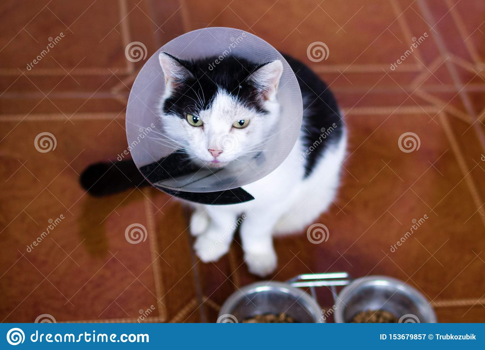 Black-white cat with plastic medical collar is sitting on a floor of kitchen near to bowls with cat food