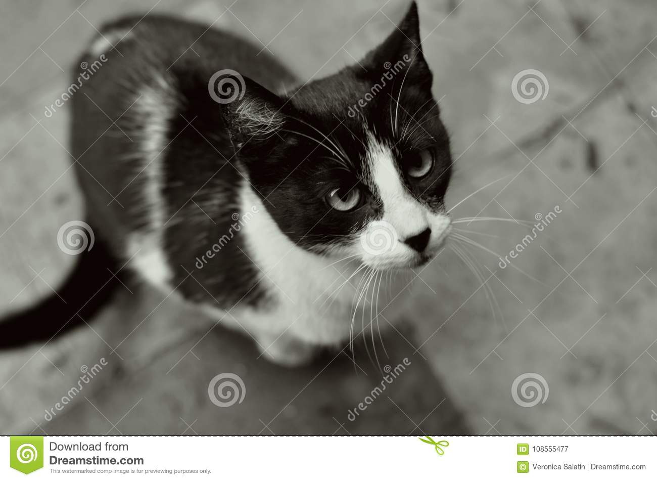 Very pretty cat black and white we love pets beautiful eyes and whiskers hes looking up