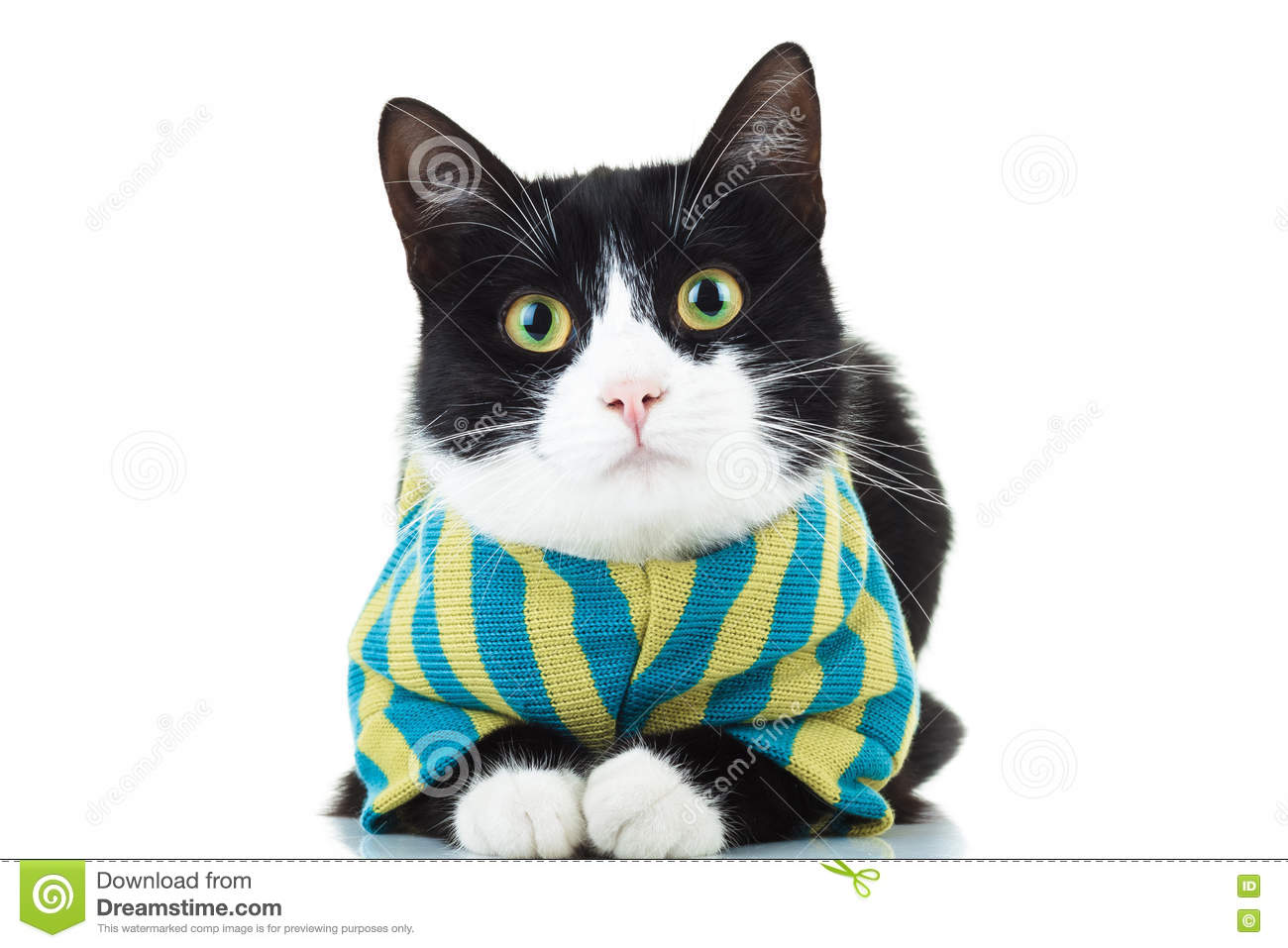 Black and white cat wearing clothes
