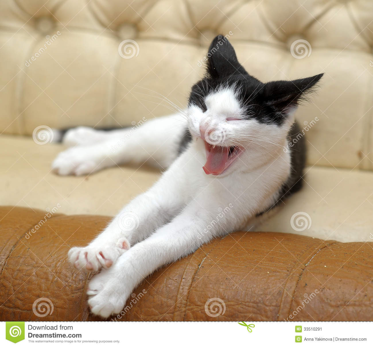 Black And White Cat Yawning Stock Image - Image: 33510291