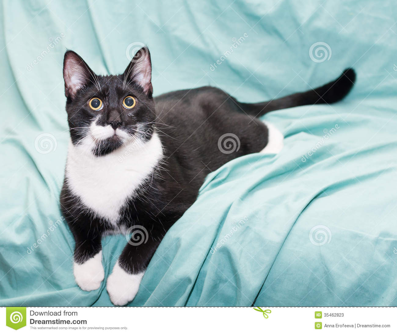 Black And White Cat With Yellow Eyes Lying Stock Photos