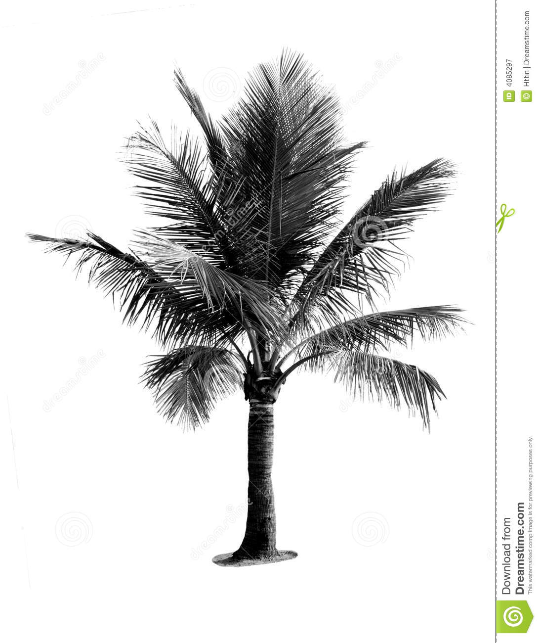 Black And White Coconut Tree Stock Image