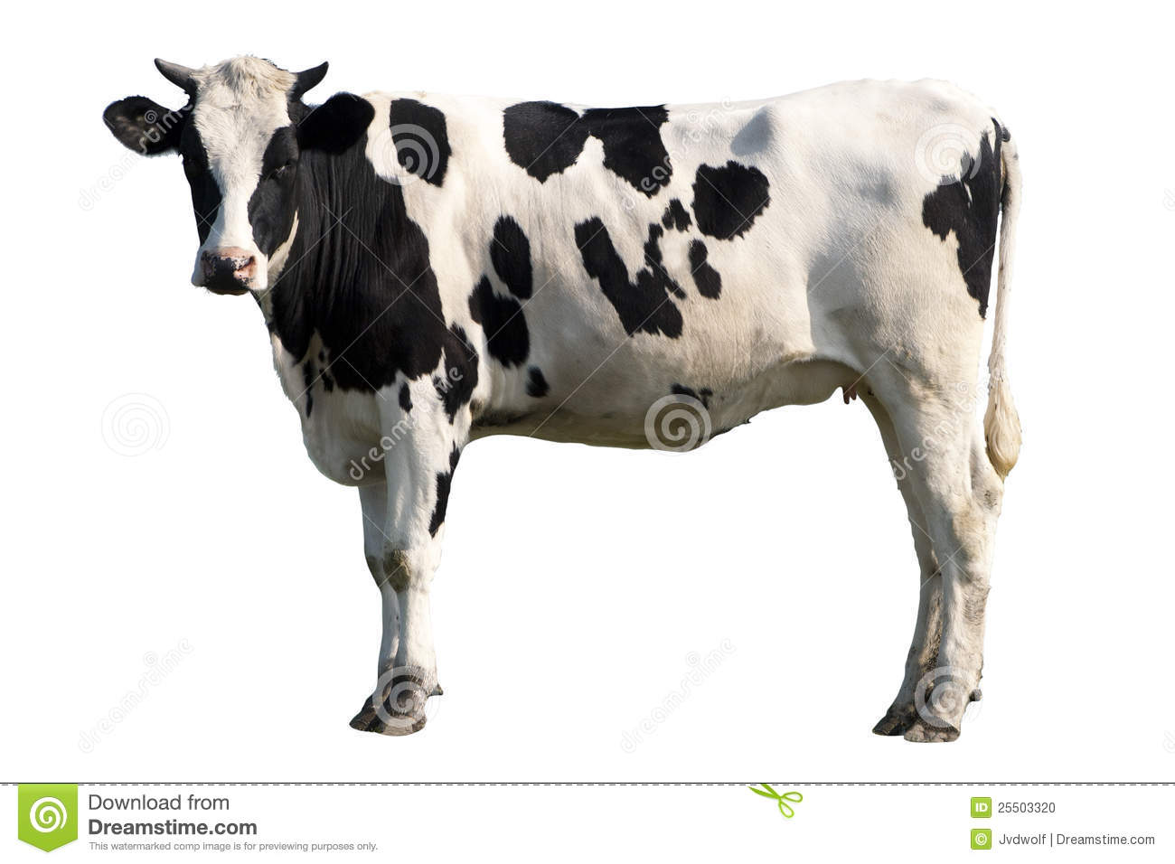 Black And White Cow Stock Photo - Image: 25503320