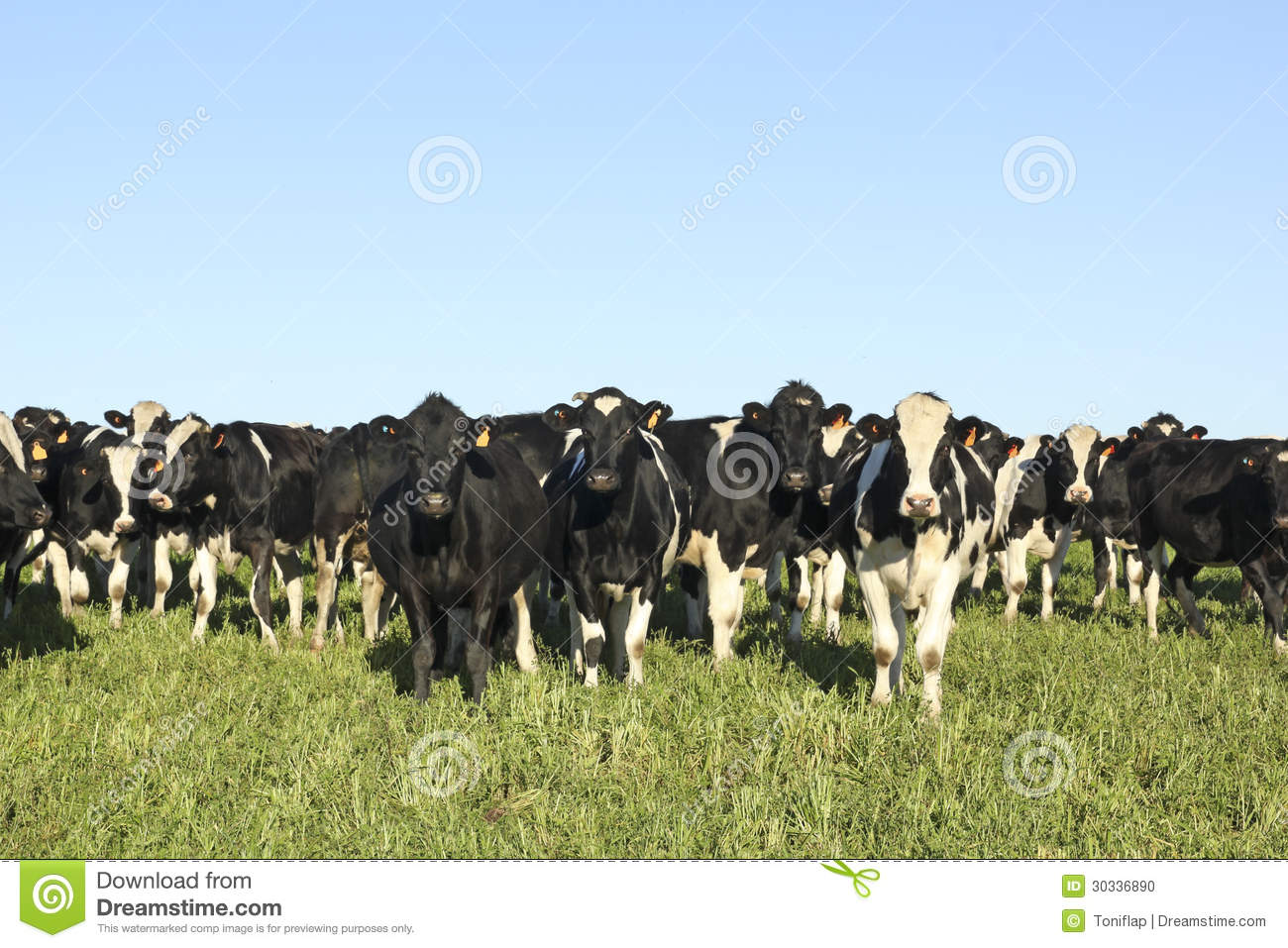cattle industry The feed cattle enterprise is an industry where millions of dollars move through these custom and private cattle feeding facilities every year the business of feeding cattle is based on a.