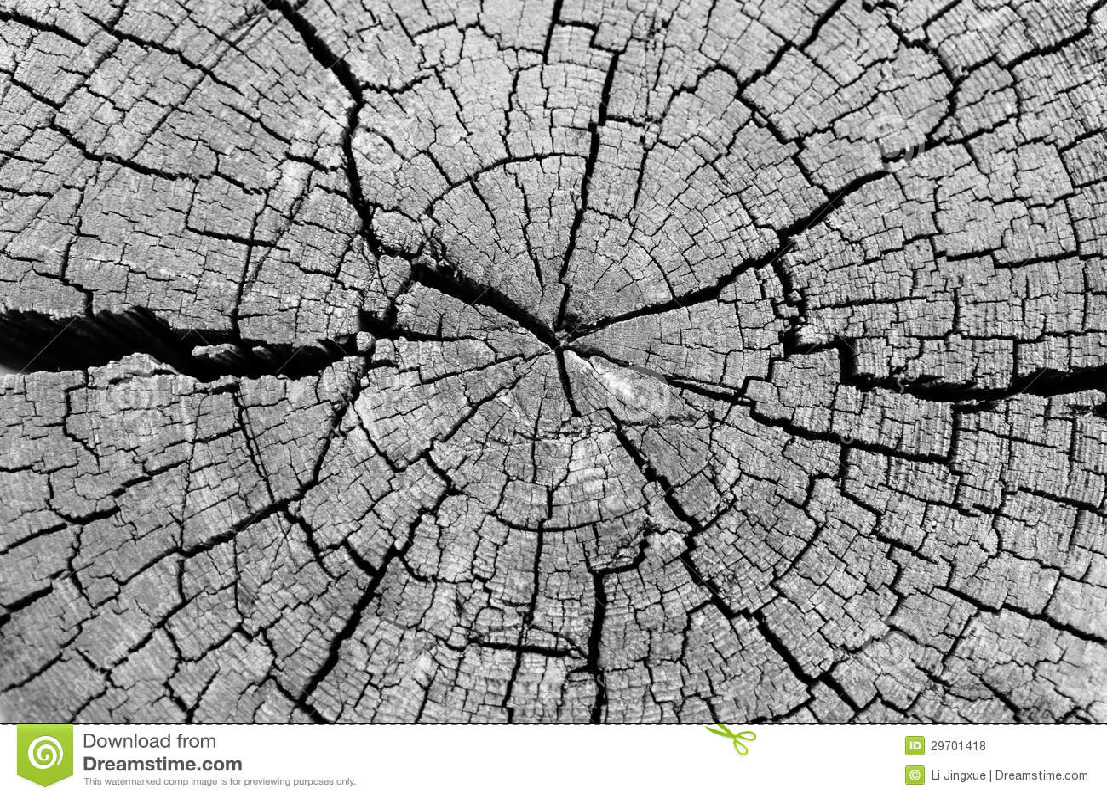 Cut log wood grain stock photo. Image of life, cross