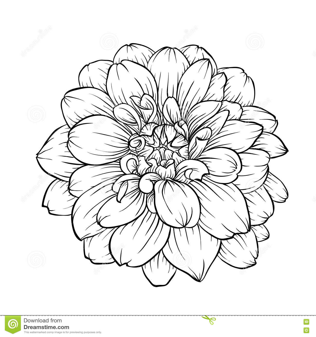 Line Art Flowers Tumblr : Black and white dahlia flower isolated on background