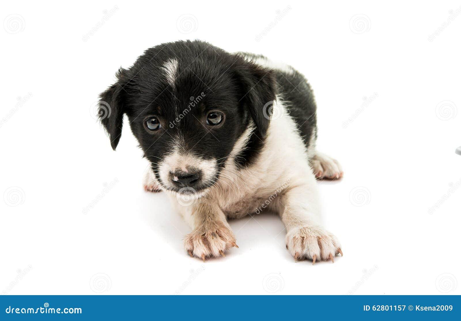 black and white dog stock photo image 62801157 schnauzer clipart free schnauzer clipart image
