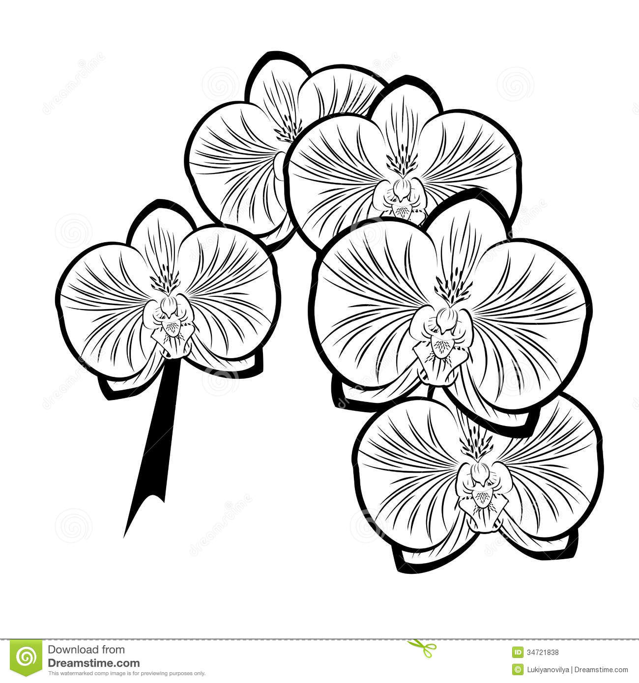 Black White Drawing Orchid Flowers Stock Illustrations 887 Black