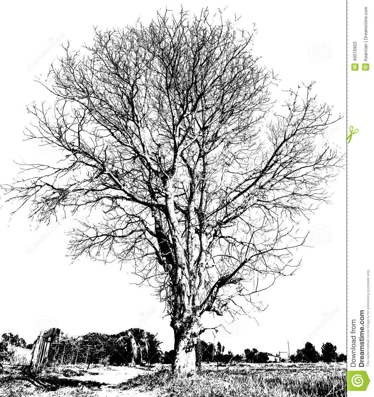 Black And White Dry Tree Stock Image. Image Of Outdoor