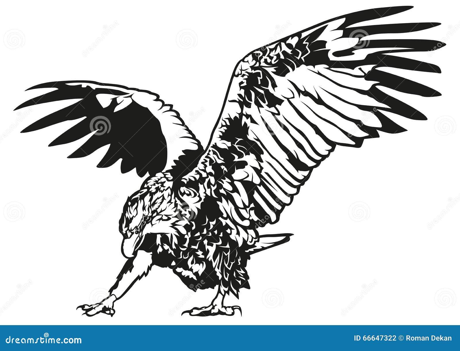 Black and White Eagle stock vector. Image of flying, beak ...