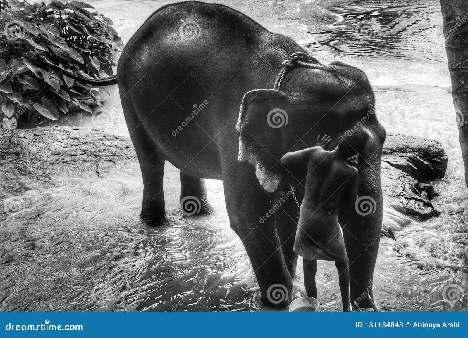 Black and white Elephant bathing