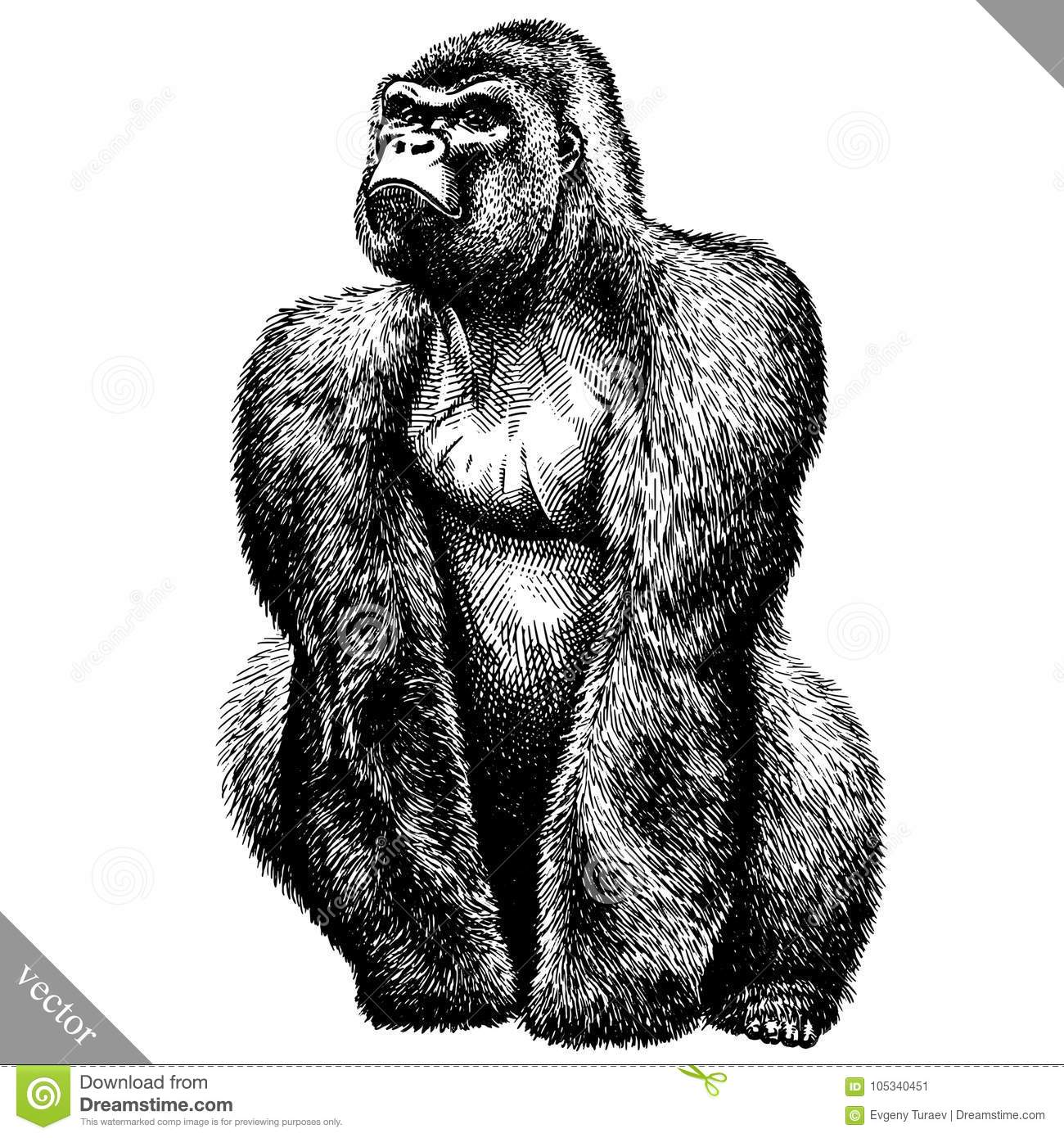 32ea4d49c Black and white engrave isolated monkey vector art. Designers Also Selected  These Stock Illustrations