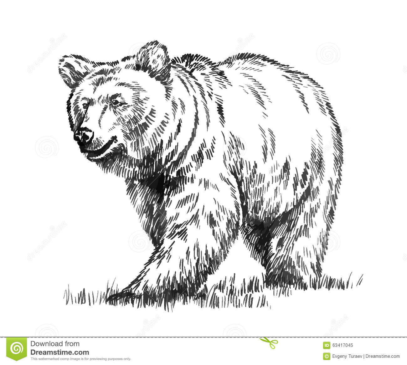 how to draw a black bear easy