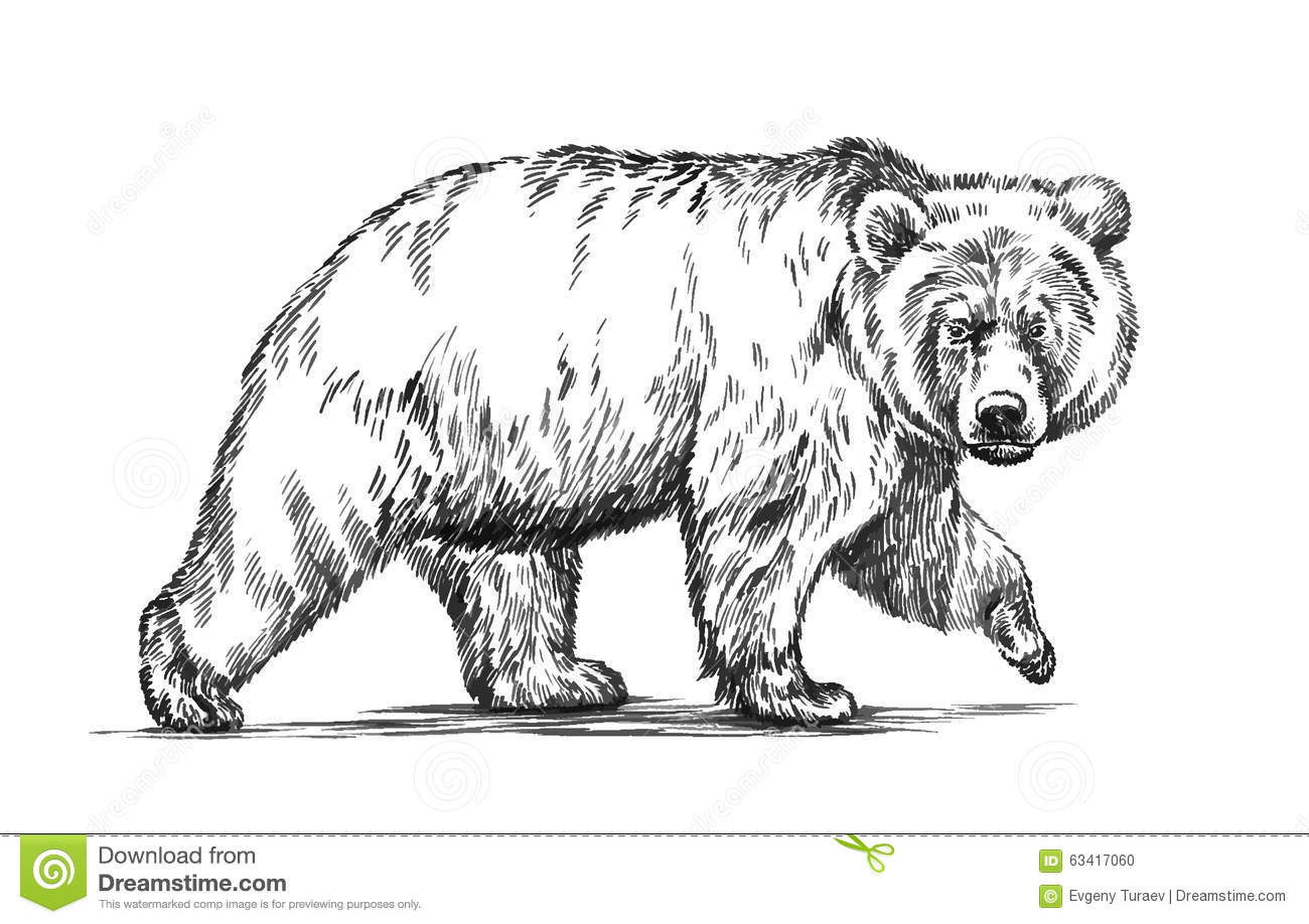 DHVuZHJhIGJpb21lIGRyYXdpbmc also Renard Roux Assis as well Stock Illustration Black White Engrave Isolated Vector Bear Ink Draw Grizzly Image63417060 furthermore 729g2 2007 engine assembly further . on taiga