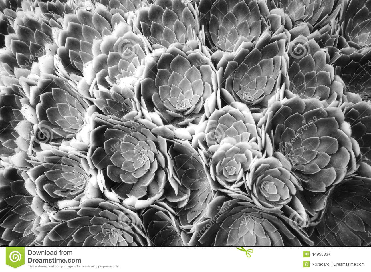Black And White Abstract Flower Stock Photo Image Of Close