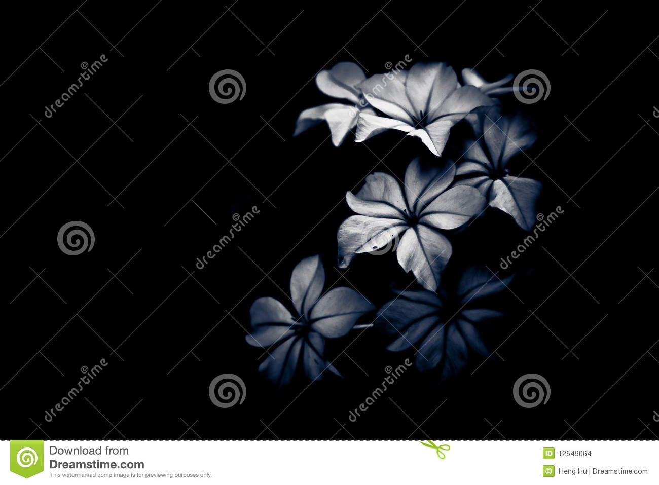 Black And White Flower Light And Shade Stock Photo Image Of