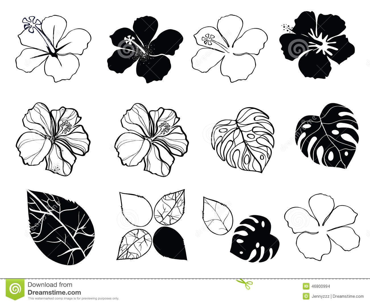Black and white flowers of hibiscus stock vector illustration of black and white flowers of hibiscus mightylinksfo