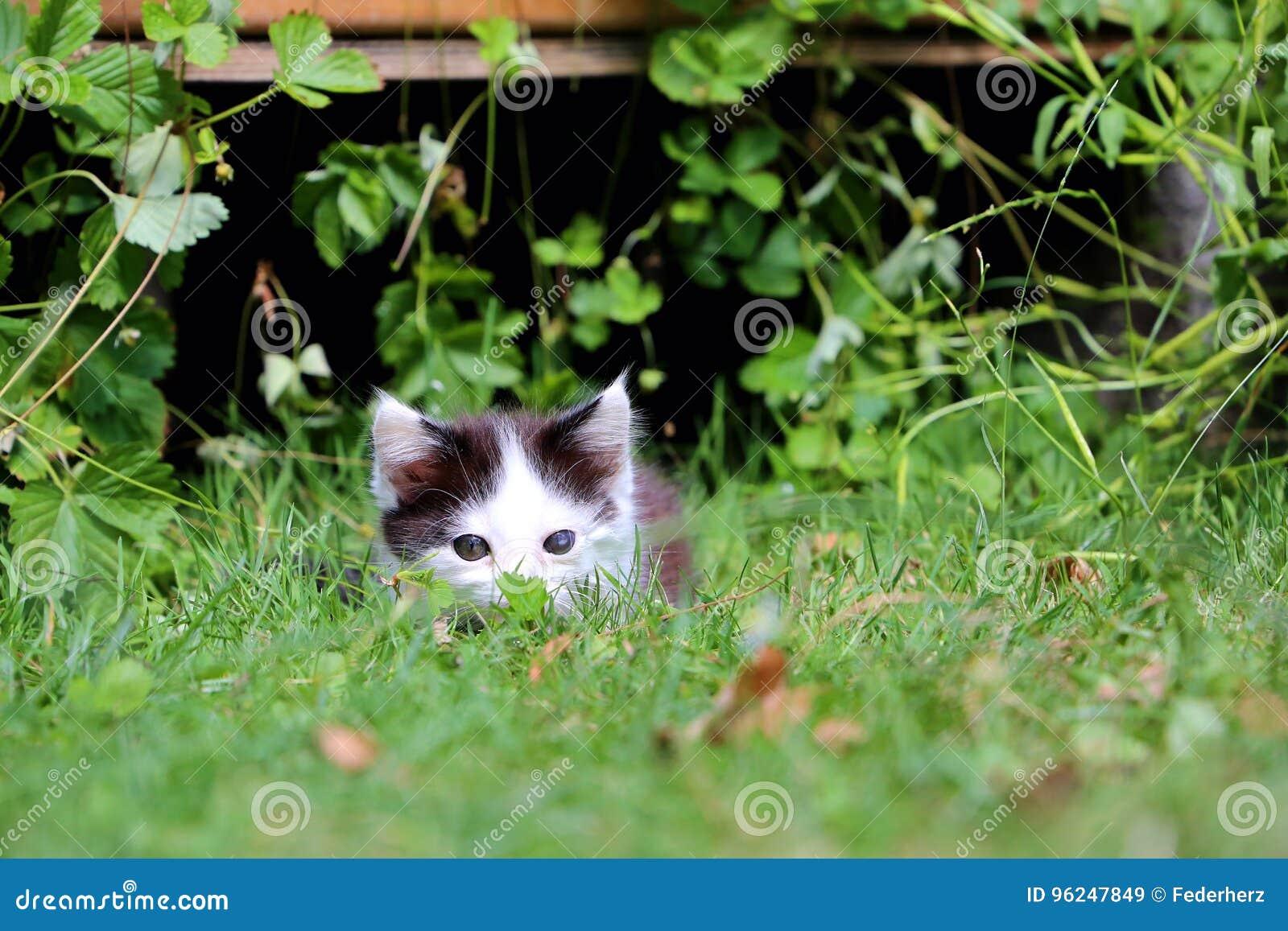 black and white garden kitten stock image image of garden gras
