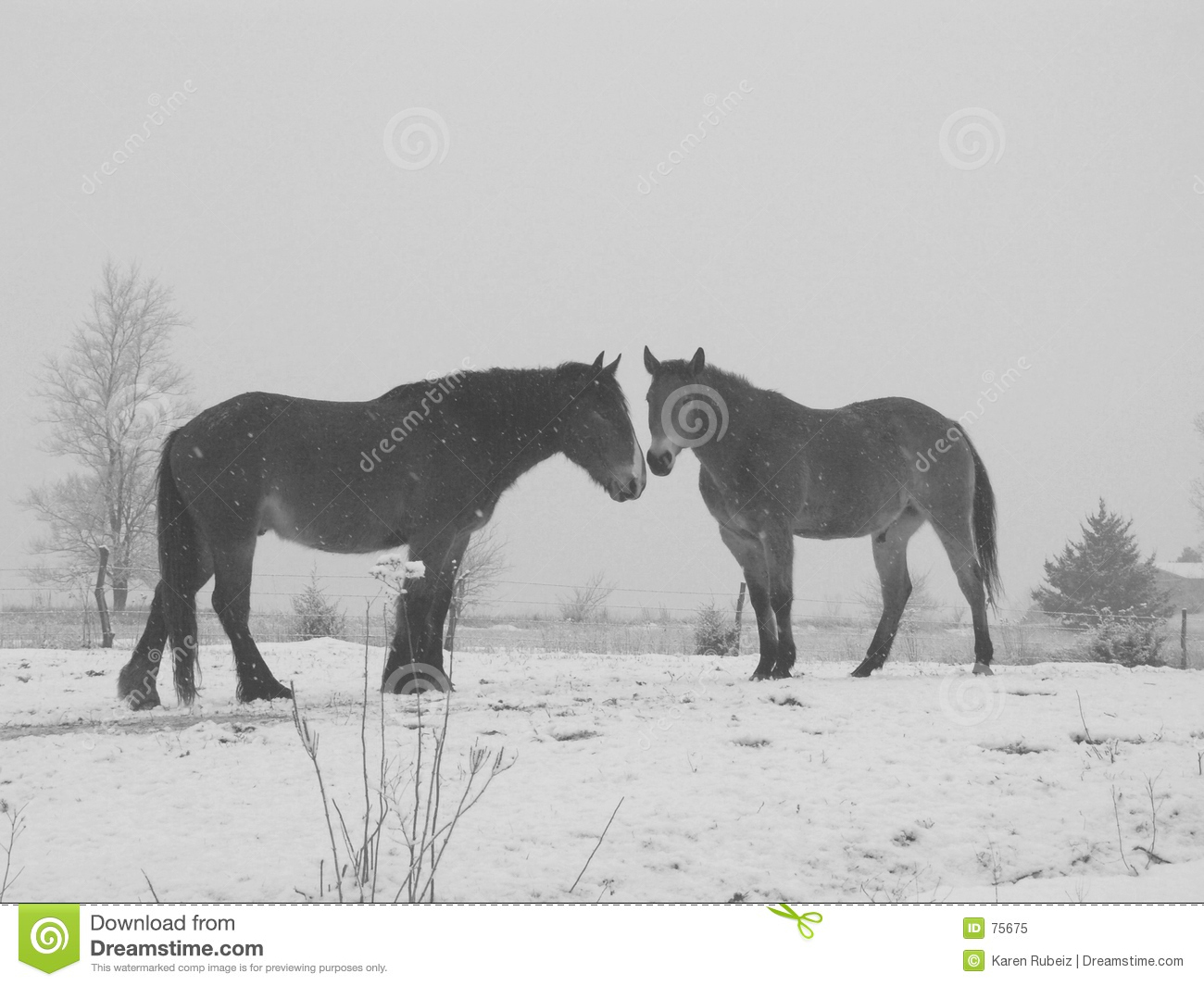Black and white horses in snow