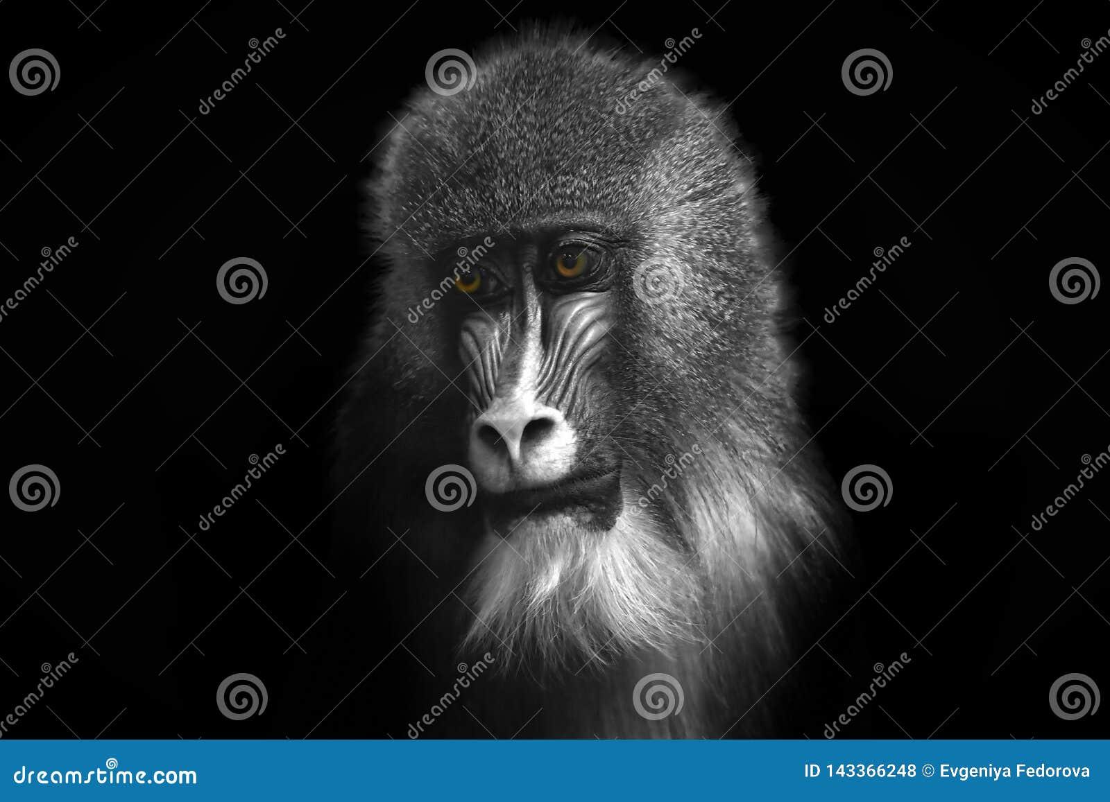 Black and white image of a monkey with bright orange eyes