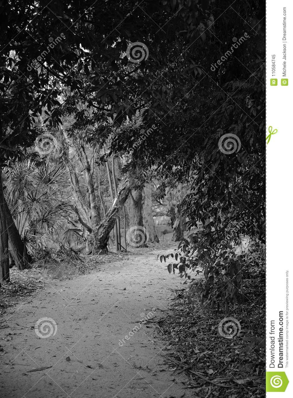 Black And White Image Of Pathway In A Forest Stock Image ...