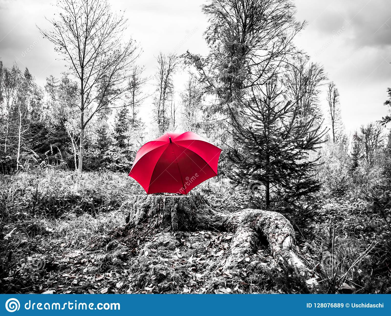 Black And White Image Of A Red Umbrella On A Trunk Stock Image