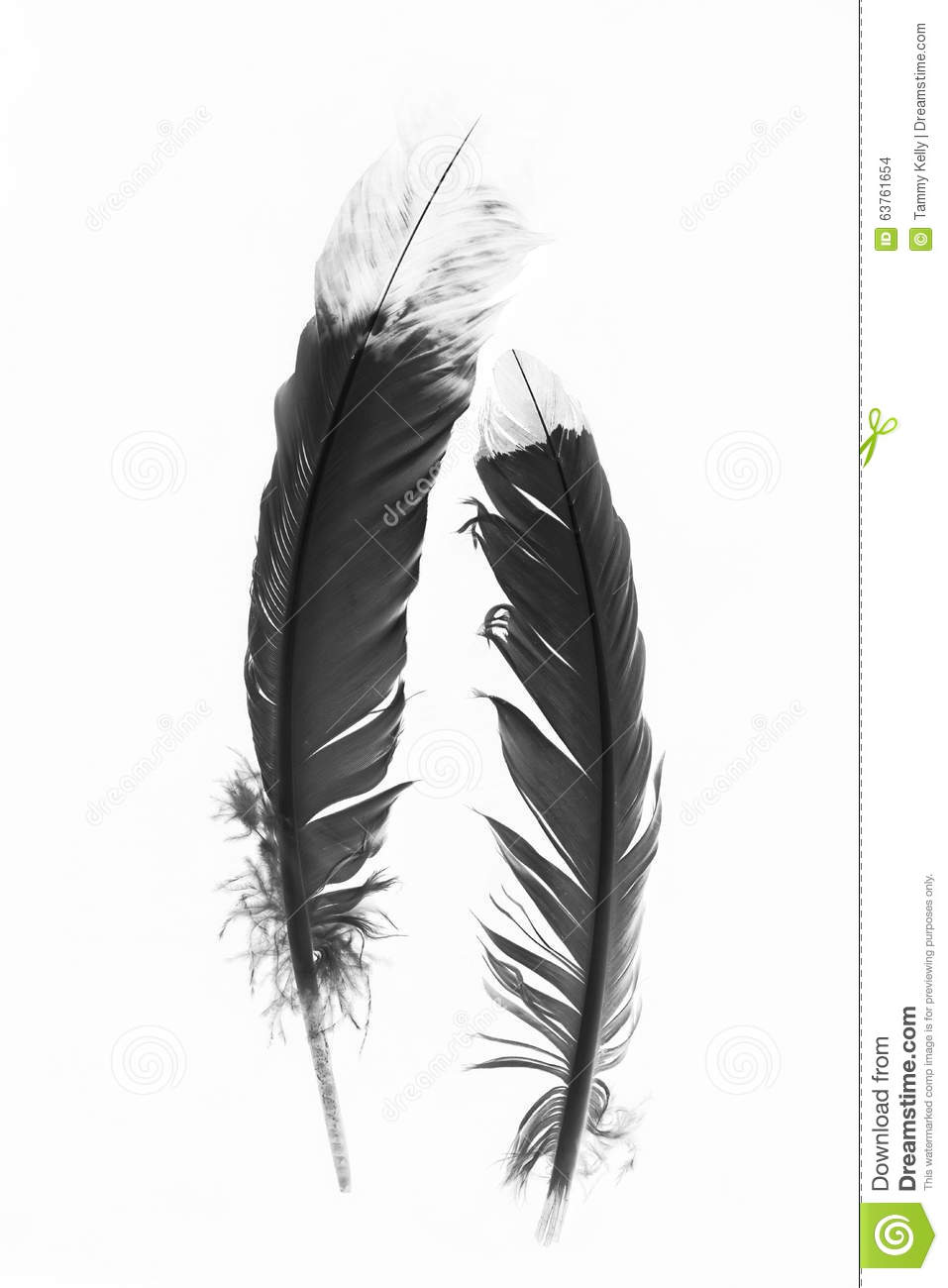 Black And White Indian Feathers On A White Background ...